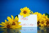 Yellow daisies — Stock Photo