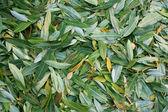 Cores quentes do outono. maple folhas cobrindo o chão. — Foto Stock