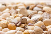 Seashells background — Stock Photo