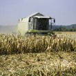 Corn harvesting — Stock Photo