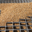 Wheat grains on the silo grid — Stock Photo