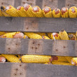 Rows of corn cobs — Stock Photo