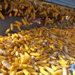 Corn cobs from tractor trailer — Stock Photo #35830775