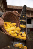 Elevator for corn cobs with basket — Stock Photo