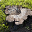 Stump — Stock Photo