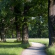 Trail between mighty trees — Stock Photo #29806887