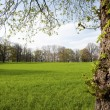 Stock Photo: Meadow in park