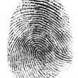 Fingerprint pattern isolated on white — Stock Photo #12794349