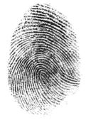 Fingerprint pattern isolated on white — Stock Photo