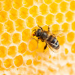 Royalty-Free Stock Photo: Bee working in honeycomb macro shot