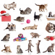 Active kittens collection. Little funny cats isolated on white. — Stock Photo