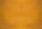 Pszczoła miód w plaster miodu — Zdjęcie stockowe