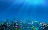 Fondo de arrecife de coral bajo el agua — Foto de Stock