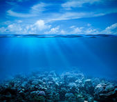 Underwater coral reef seabed view with horizon and water surface — Stok fotoğraf