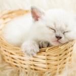 Sleeping kitten in basket — Stock Photo