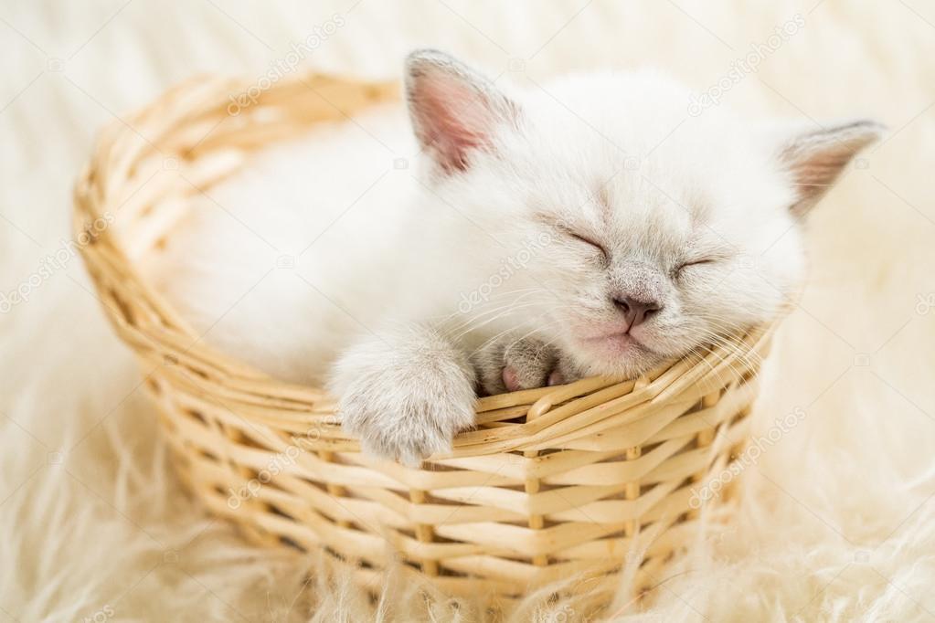 睡在篮子里的猫— photo