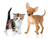 Puppy and kitten isolated on white — Stock Photo