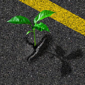 Sprout from asphalt hole — Stock Photo