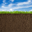 Photo: Soil, grass and sky background