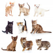 Different kittens collection — Stock Photo #27786337