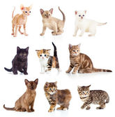 Different kittens collection — Stock Photo