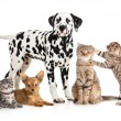 Stock Photo: Pets animals group collage for veterinary or petshop isolated