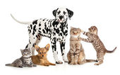 Pets animals group collage for veterinary or petshop isolated — Stock Photo