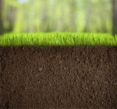 Soil under grass in forest — Stock Photo