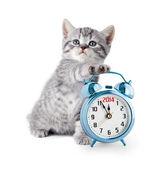 Gatito británico con despertador mostrando 2014 — Foto de Stock