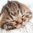 Stock Photo: Sleeping baby kitten