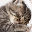 3 weeks sleeping baby kitten — Stock Photo #37020873