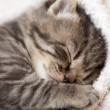 3 weeks sleeping baby kitten — Stock Photo