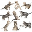 Tabby kittens isolated collection — Stock Photo #38644605