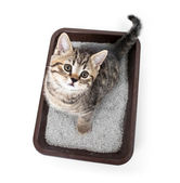 Kitten or cat in toilet tray box with absorbent litter isolated — Stock Photo