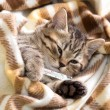 Stock Photo: Ill kitten lying with high temperature