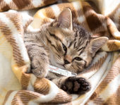 Ill kitten lying with high temperature — Stock Photo