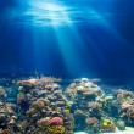 Sea or ocean underwater coral reef snorkeling or diving backgrou — Stock Photo