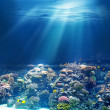 Sea or ocean underwater coral reef — Stock Photo