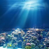 Sea or ocean underwater coral reef — Stock Photo