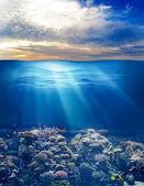Günbatımı gökyüzü ile deniz ya da okyanus sualtı hayatı — Stok fotoğraf
