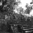 Coba Mayan Ruins - Stock Photo