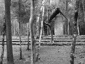 Coba maya stele — Stockfoto