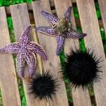 Sea urchin, echinus and starfish — Stock Photo #12481317