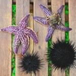 Sea urchin, echinus and starfish — Stock Photo #12481323