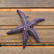 Starfish — Stock Photo #12481331