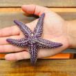 Starfish — Stock Photo #12481356