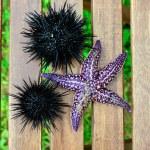 Sea urchin, echinus and starfish — Stock Photo #12481500