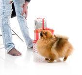 Dog with gift boxes on white background, studio shot — Stock Photo