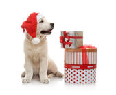 Three-month golden retriever puppy in a red Santa Claus hat near to a stack of boxes with gifts — Stock Photo