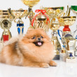 Puppy with golden cup on white background - Zdjęcie stockowe